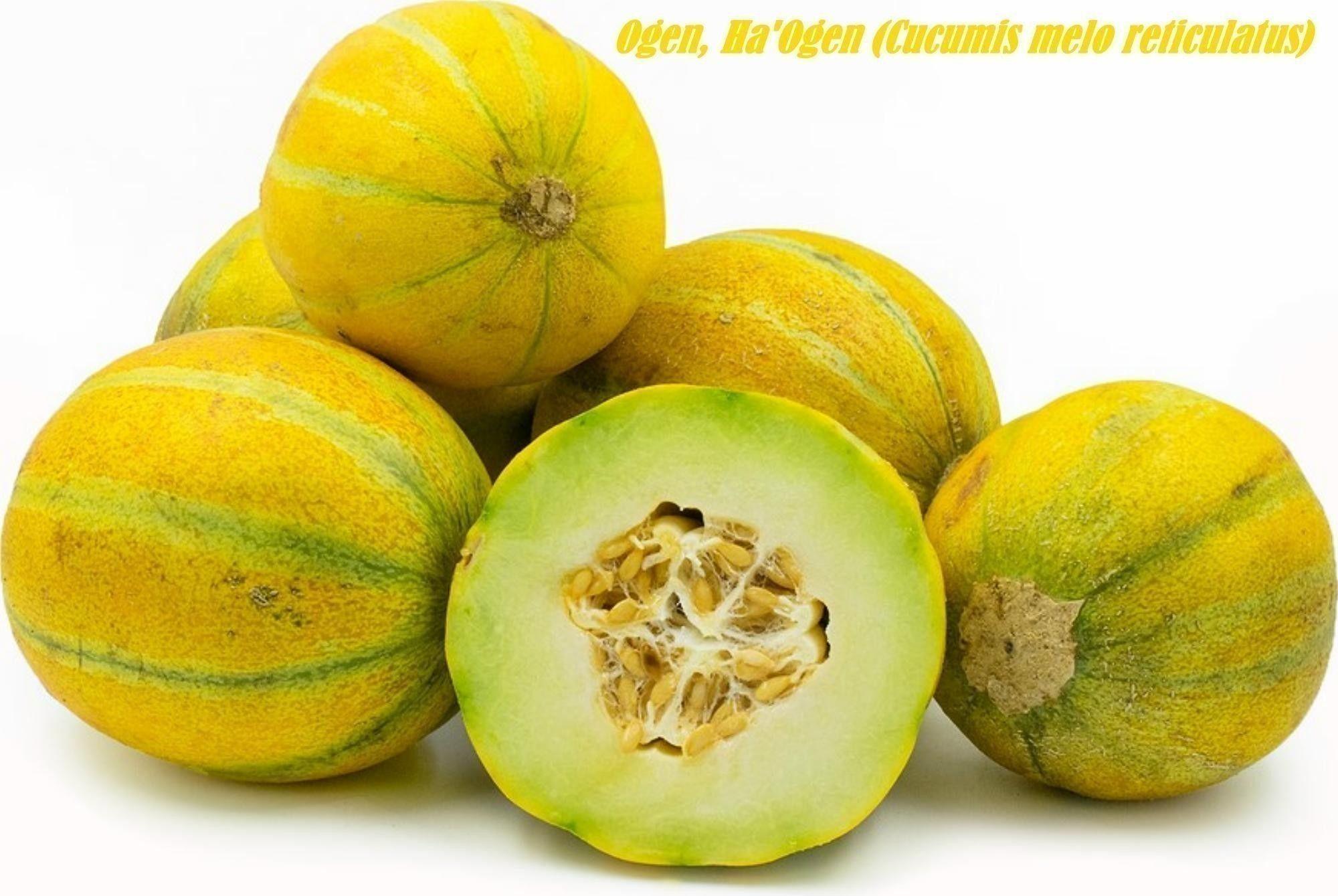 Ogen Ha Ogen Desert Melon Seeds Cucumis Melo Reticulatus Seeds Season Fruits And Vegetables Tomato Seeds