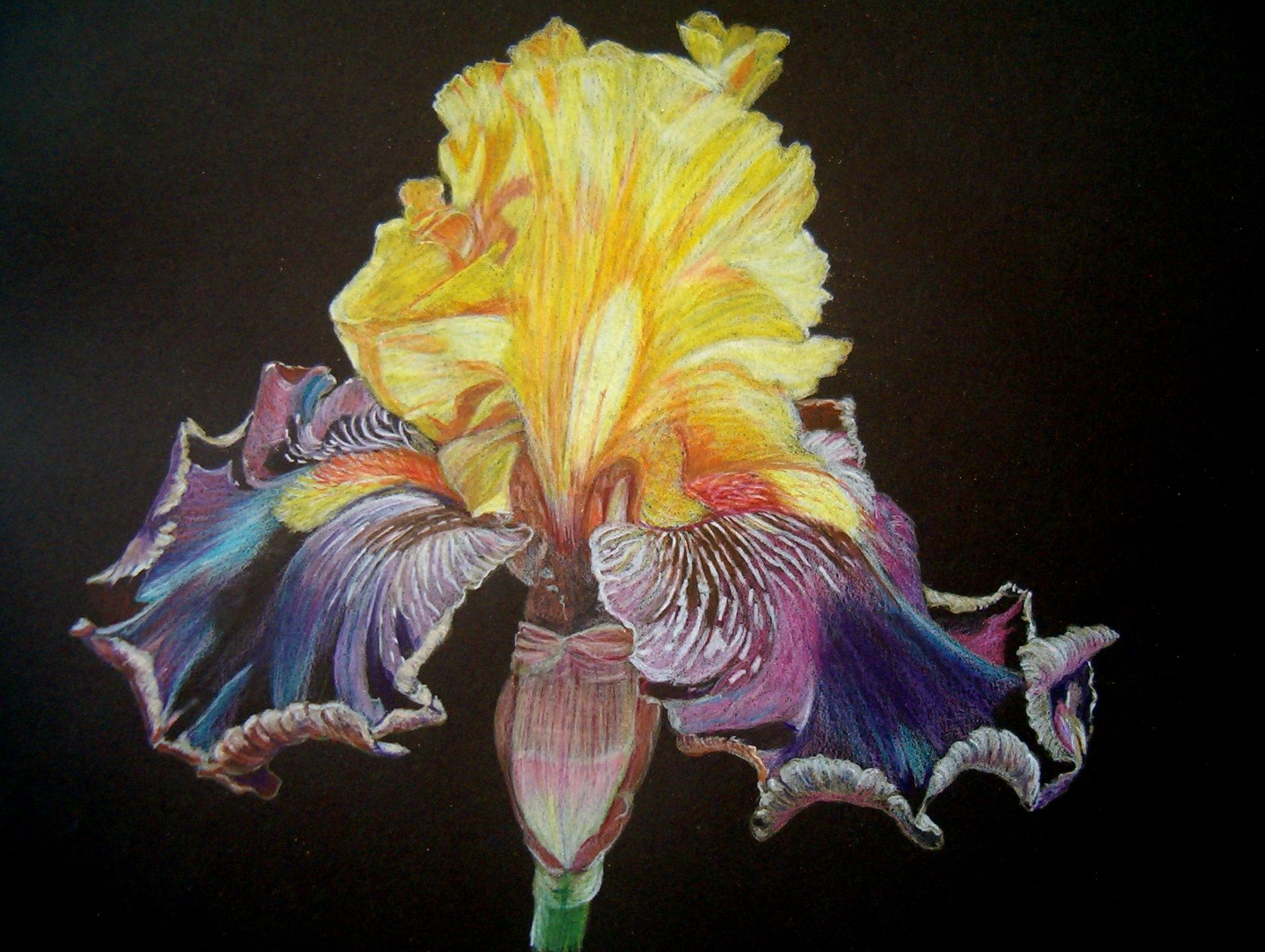 My Art Photographed By Me And Than Drawn With Colored Pencil On