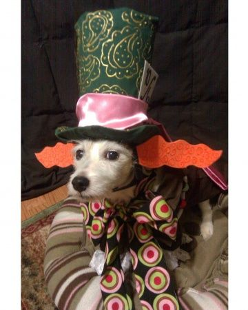 The Mad Hatter Dog Halloween Pet Costumes