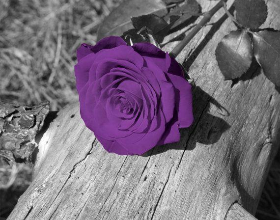 Negro blanco púrpura rosa flor pared arte fotografía Home Decor enmarañado foto