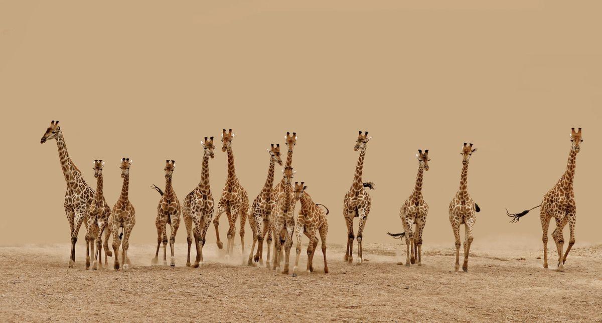 Frederick-van-Heerden,-South-Africa,-Shortlist,-Nature-Wildlife,-Open-Competition-2013_PRESS