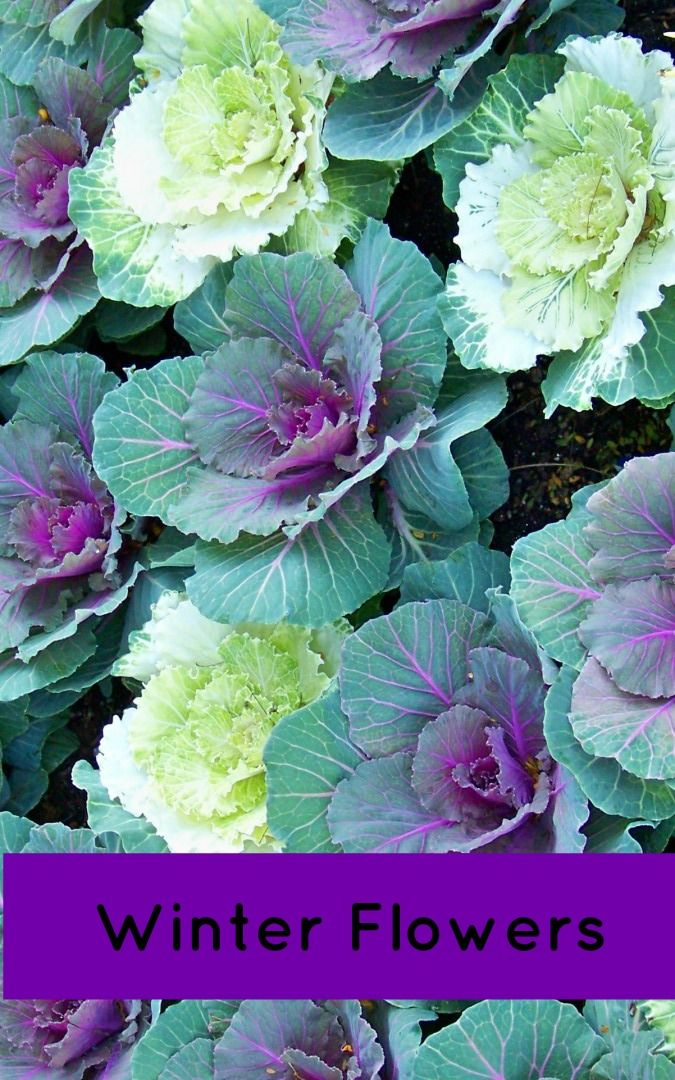 Winter Flowers For Florida Follow This Garden Chart For
