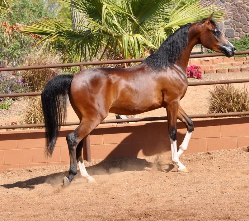 Pstratosphere PCF (Pstrategy x Majoretta)