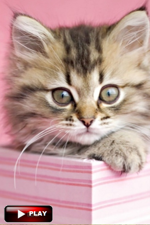 CuteCatsKittensVideo Funny cats Videos Vines 2016 Cute