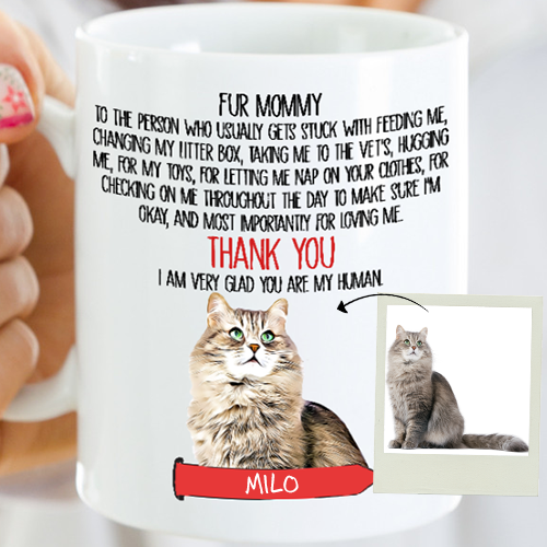 Great Fun for All Cat Lovers Feed Me Meow  New Design