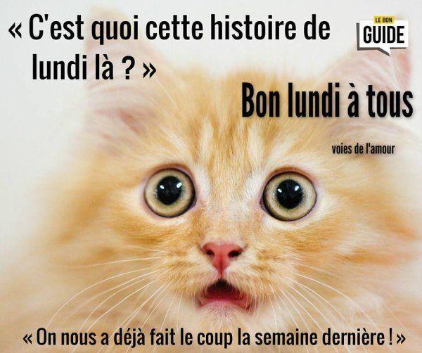 """Très Résultat de recherche d'images pour """"bon lundi et bonne semaine  LY59"""