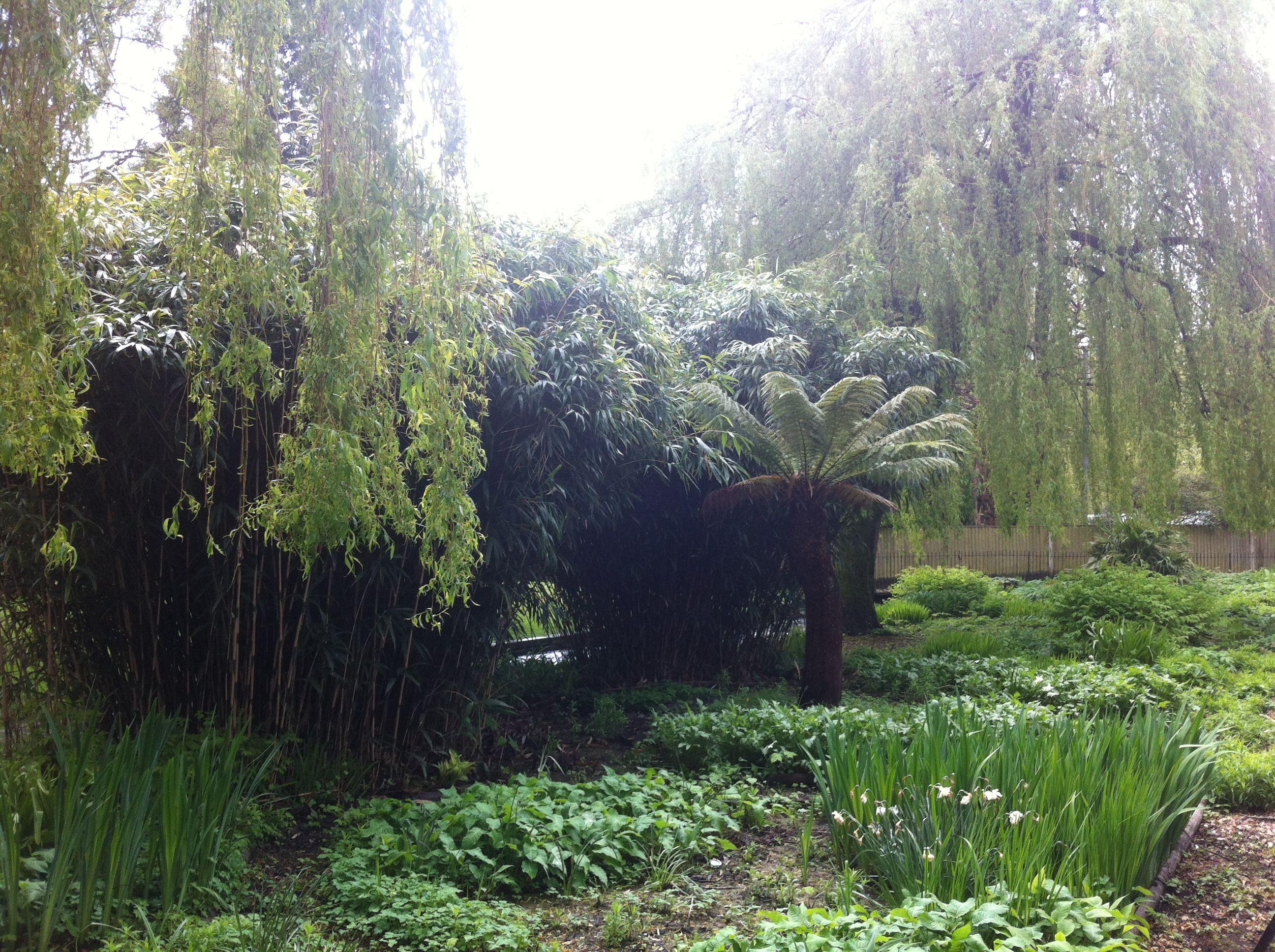 Garden landscape trees  Love willow trees  Garden Ideas  Pinterest  Willow tree Garden