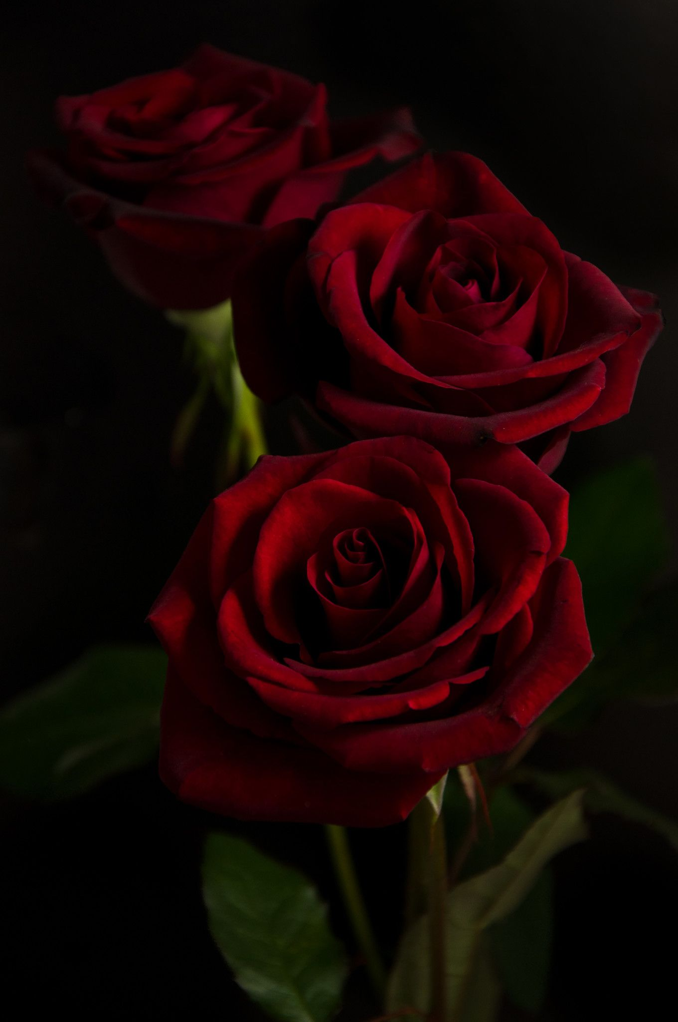 Three Red Roses On A Black Background Red Roses Background Red Roses Wallpaper Love Rose Flower