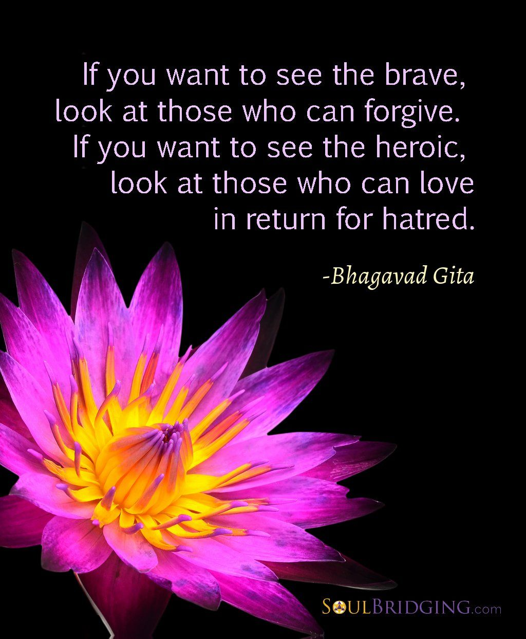 Quote About Forgiveness If You Want To See The Brave Look At
