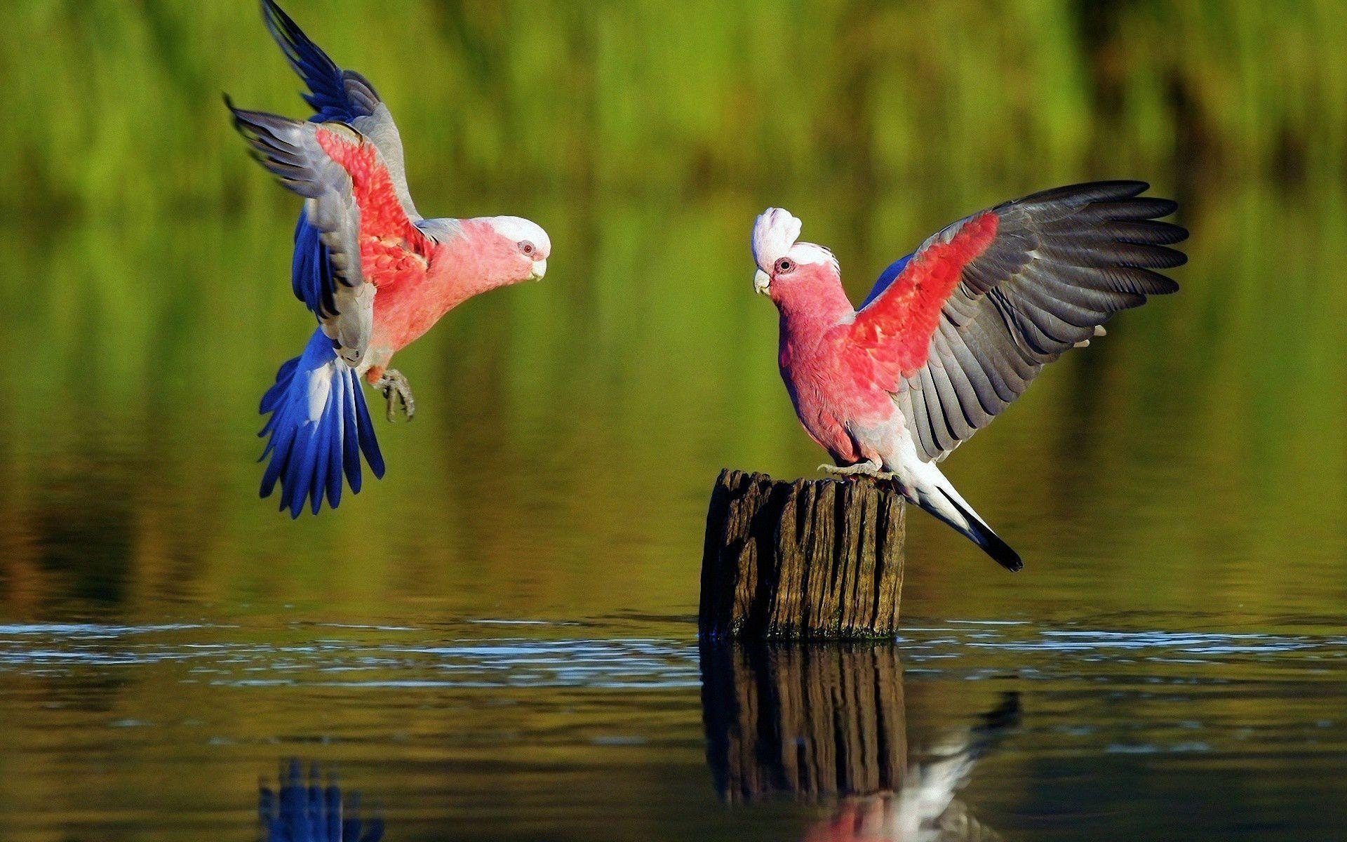 Parrot Wallpapers Hd Wallpapers Inn Animals Pet Birds Beautiful Birds