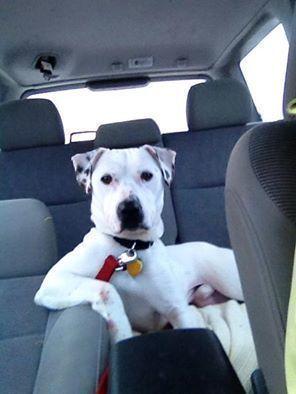 Lustige FotoAufnahme von einem Hund unterwegs im Auto
