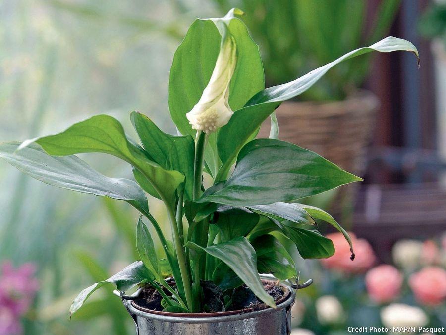 Trouvez la plante d 39 int rieur qu 39 il vous faut fleur de for Plante maison