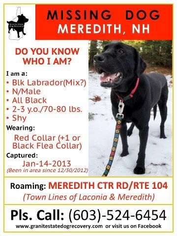Please Help In New Hampshire This Found Stray Dog Is Looking