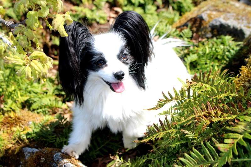 Puppies Always Help Cute Teacup Puppies Teacup Puppies Puppies