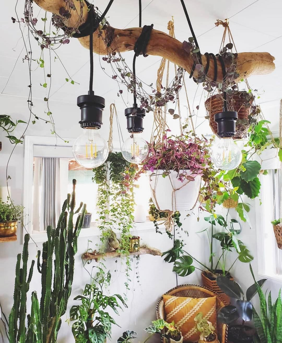 Gimme All The Hanging Things Plant Decor Indoor Plant