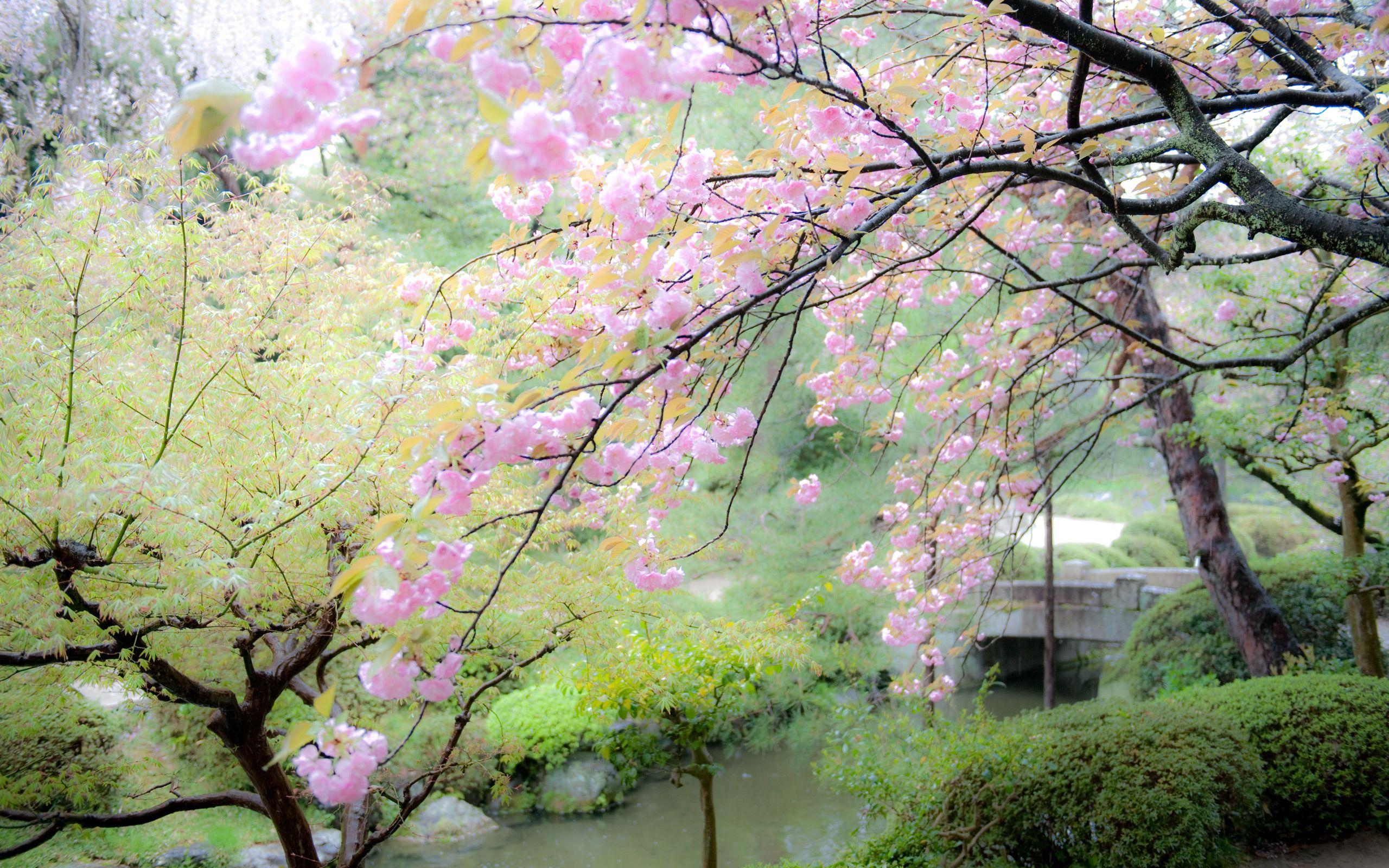 Pond Bamboo Lotus Zen Garden
