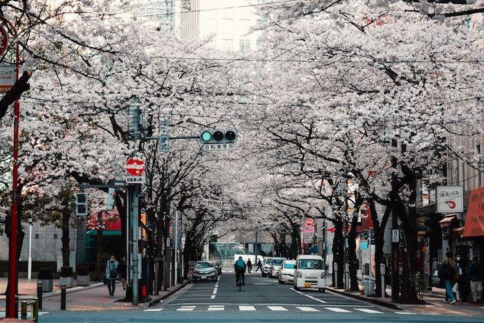 ▷ 1001 + photos de paysage de printemps pour célébrer le réveil de la nature