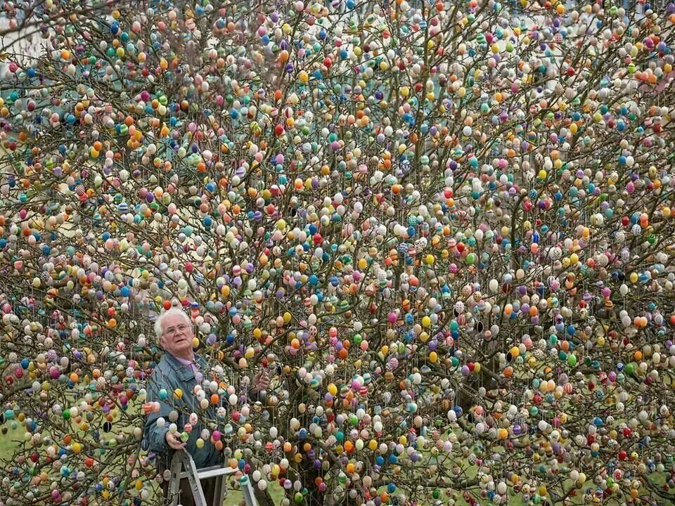 This man put all these easter eggs on this tree ,prettu cool.