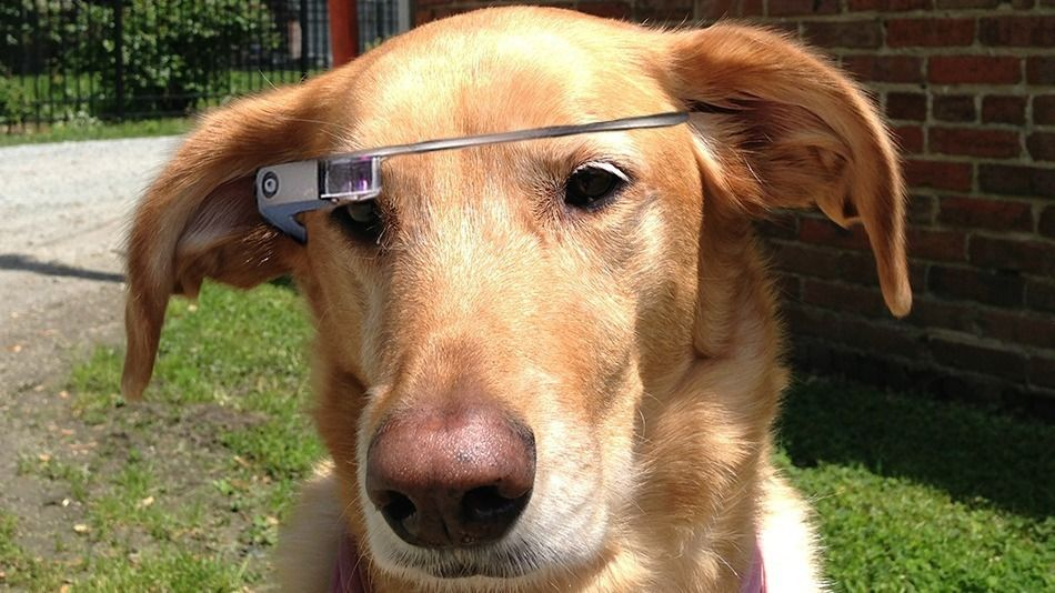 This New Google Glass Is The Dogs Googleglass Google Glass