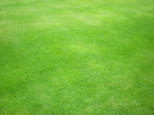 50 Free High Resolution Grass Textures For Designers Grass
