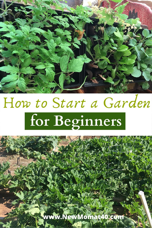 Starting A Garden For Beginners In 2020 Starting A Garden
