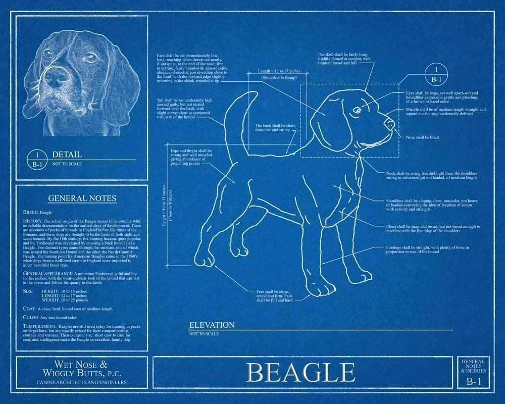 Beagle blueprint this beagle blueprint is a wonderful piece of art beagle blueprint this beagle blueprint is a wonderful piece of art that will make a malvernweather Image collections