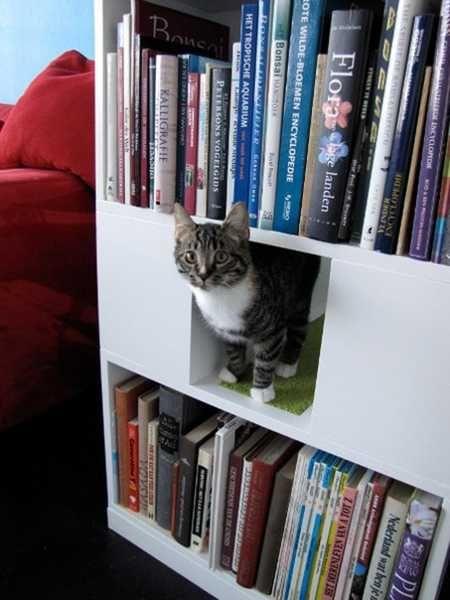 33 Modern Cat And Dog Beds Creative Pet Furniture Design Ideas Pet Furniture Dog Furniture Cat Bed