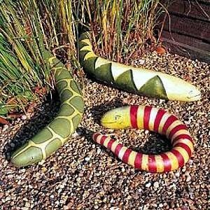 Amazon Com Snake Gourd 5 Seeds Grow Your Own Slippery Snake