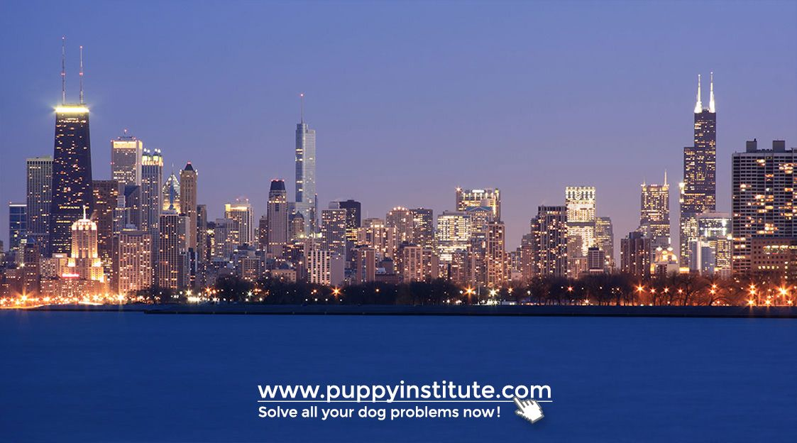 The Best Dog Training In Chicago Local Dog Trainer Best Dog