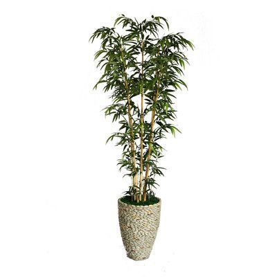 Laura Ashley Home Tall Bamboo Tree In Decorative Vase Bamboo Color