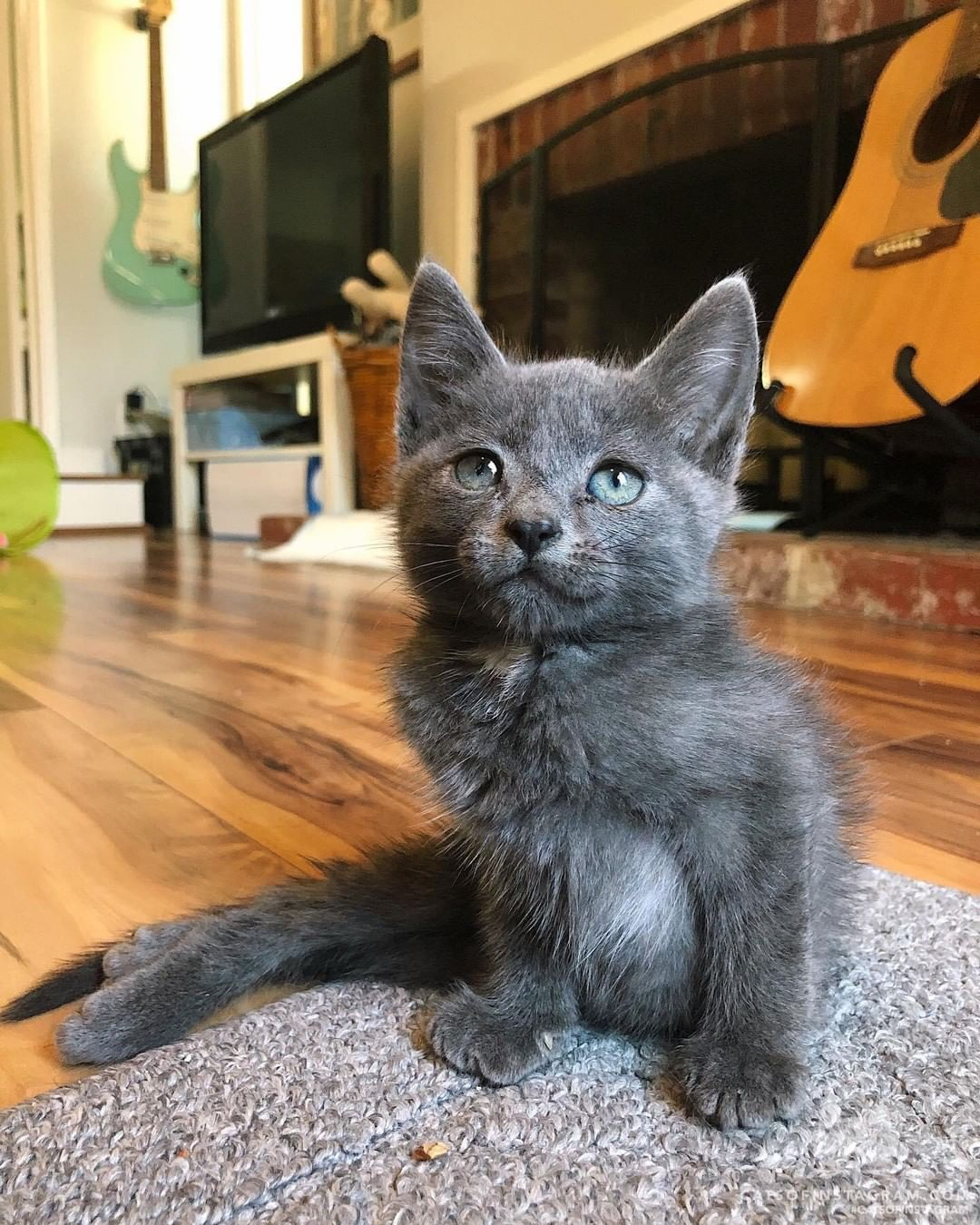 Cats Of Instagram On Instagram From Fosterpetsofsac Perry The Paralyzed Kitten Is So Happy Because He Just Found His In 2020 Cats Kittens Cutest Cats Of Instagram