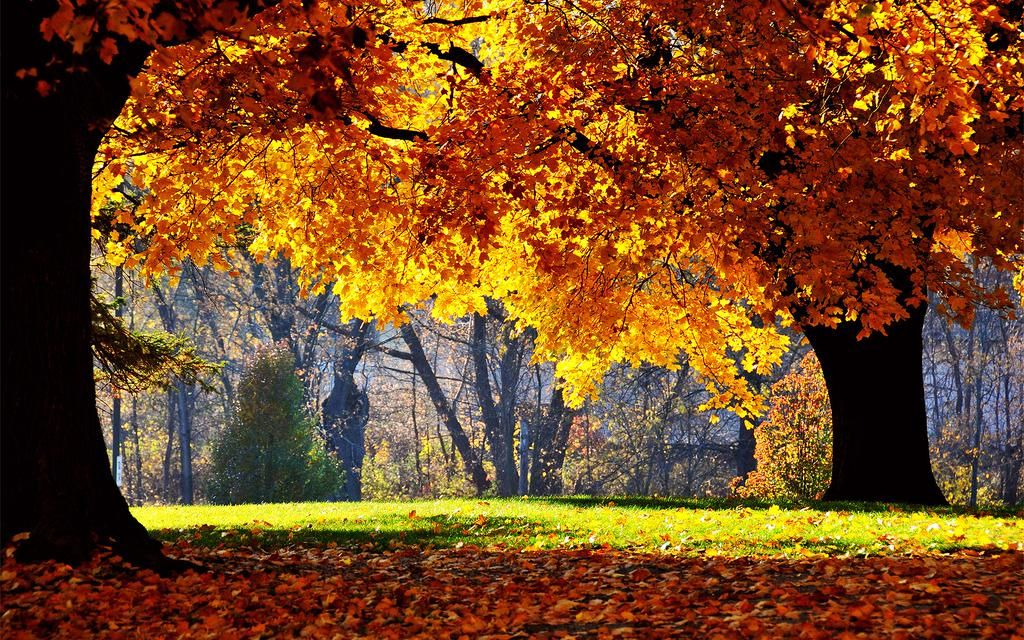 Filipe On Twitter Autumn Landscape Fall Pictures Nature Autumn Trees