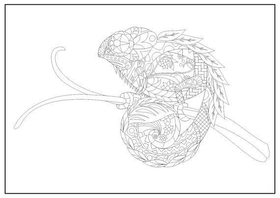 Reptielen Kleurplaten Printen.Pin Van Barbara Op Coloring Reptile Pinterest