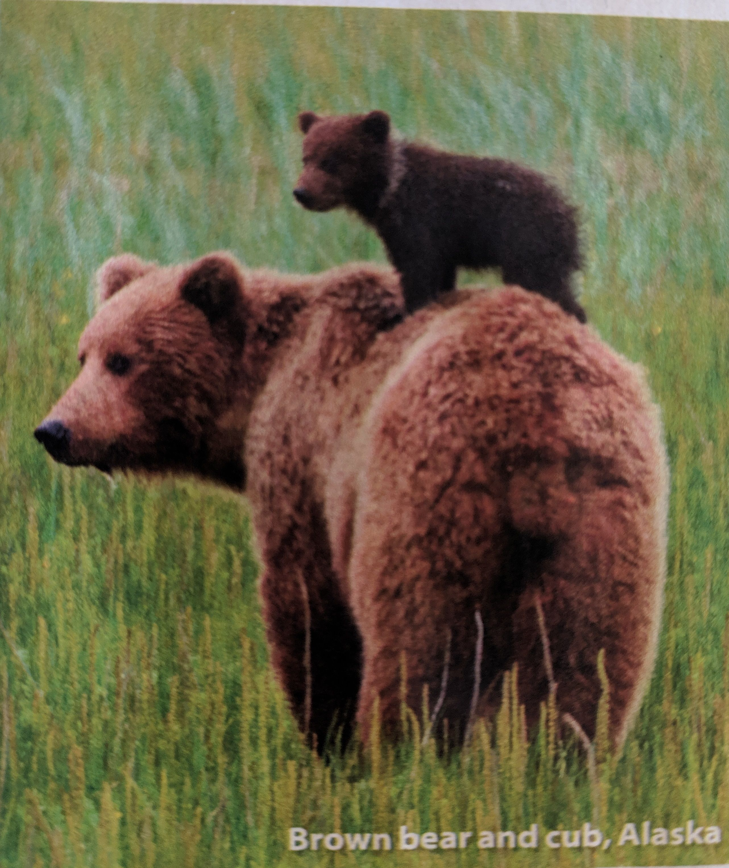 Pin On Babies Kids Animals