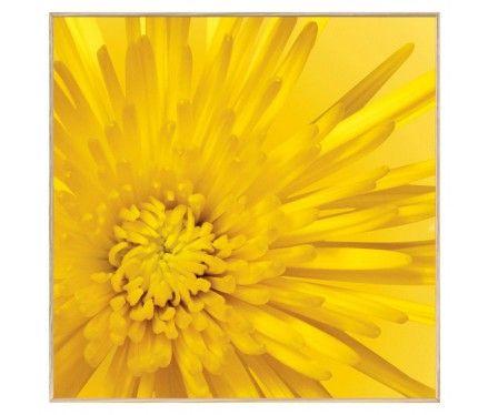 Yellow Mum Close-up Art Print.