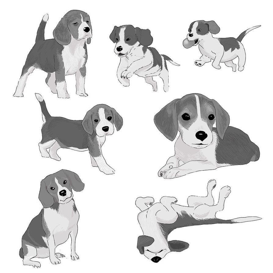 Beagles And Beagles For One Of My Project I Ve Been Drawing Dogs