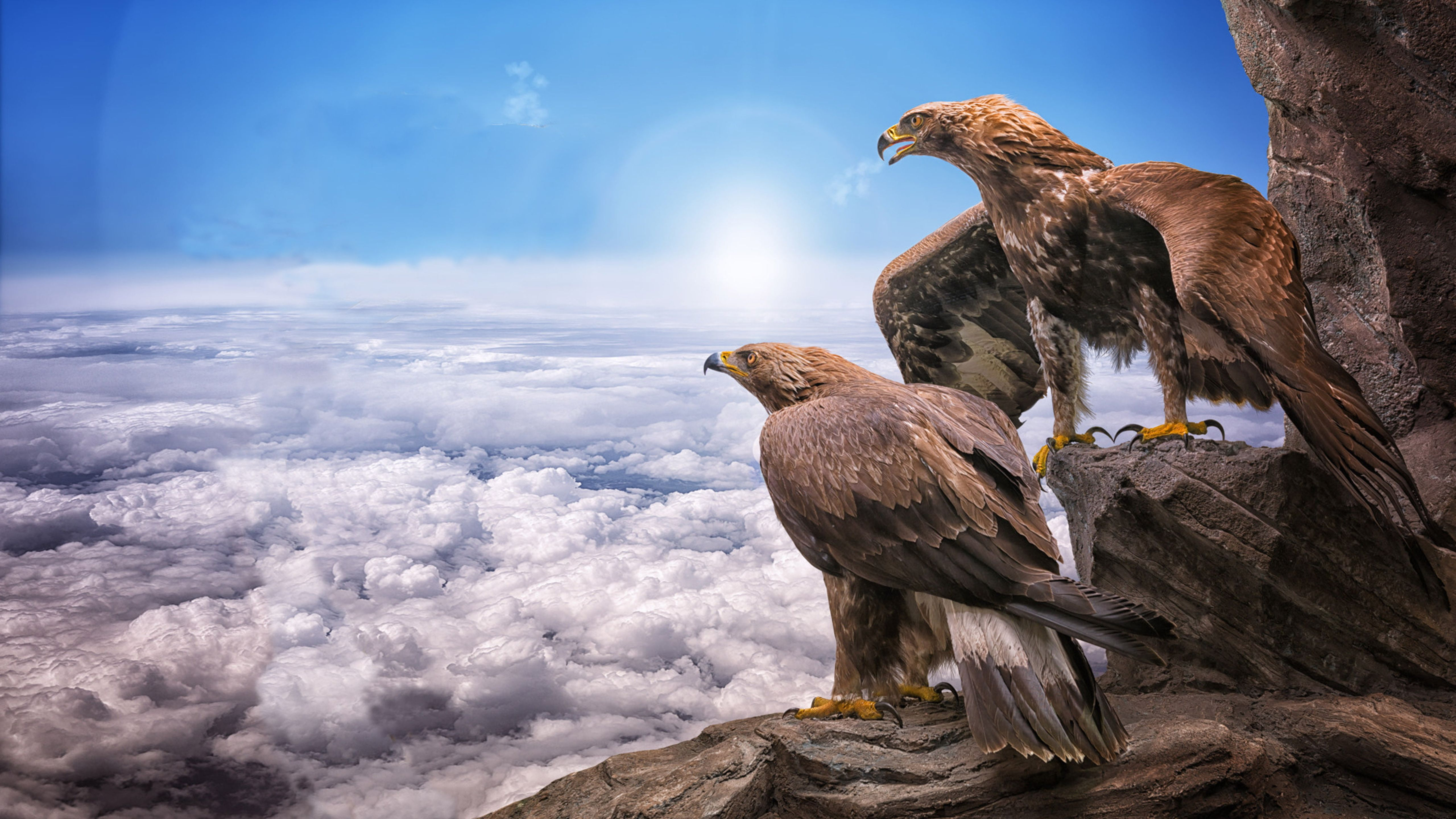 5120x2880px Free Download Hd Wallpaper Eagles Birds Prey Masters At Heights Sky Clouds Roc Sun Animals Hd Wallpaper Desktop Photo Wallpaper Sky And Clouds