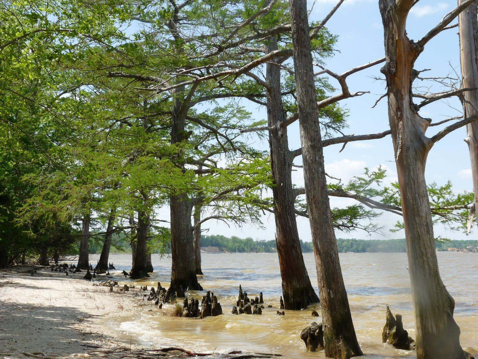 Beach Chippokes Plantation State Park. Surry Va. Haven