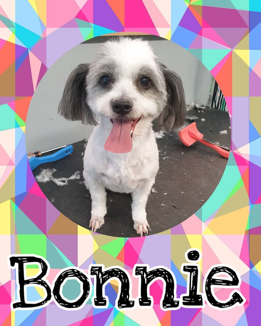 Bonnie Loveisinthehairdoggrooming Doggrooming Doggroomer