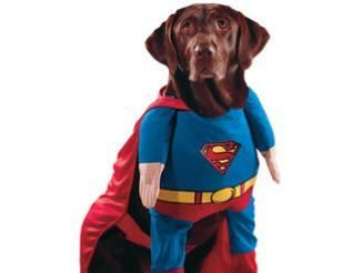 3rd Annual Halloween Dog Costume Contest Ocean City Nj Dog