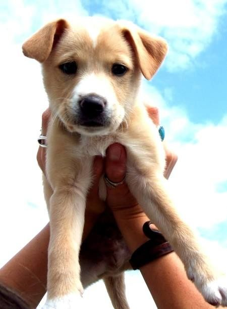 beagle lab mix adorable Erin B B Auten This is what i'm