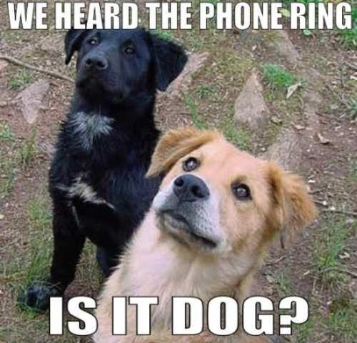 Dog Phone Meme Dog on Phone m