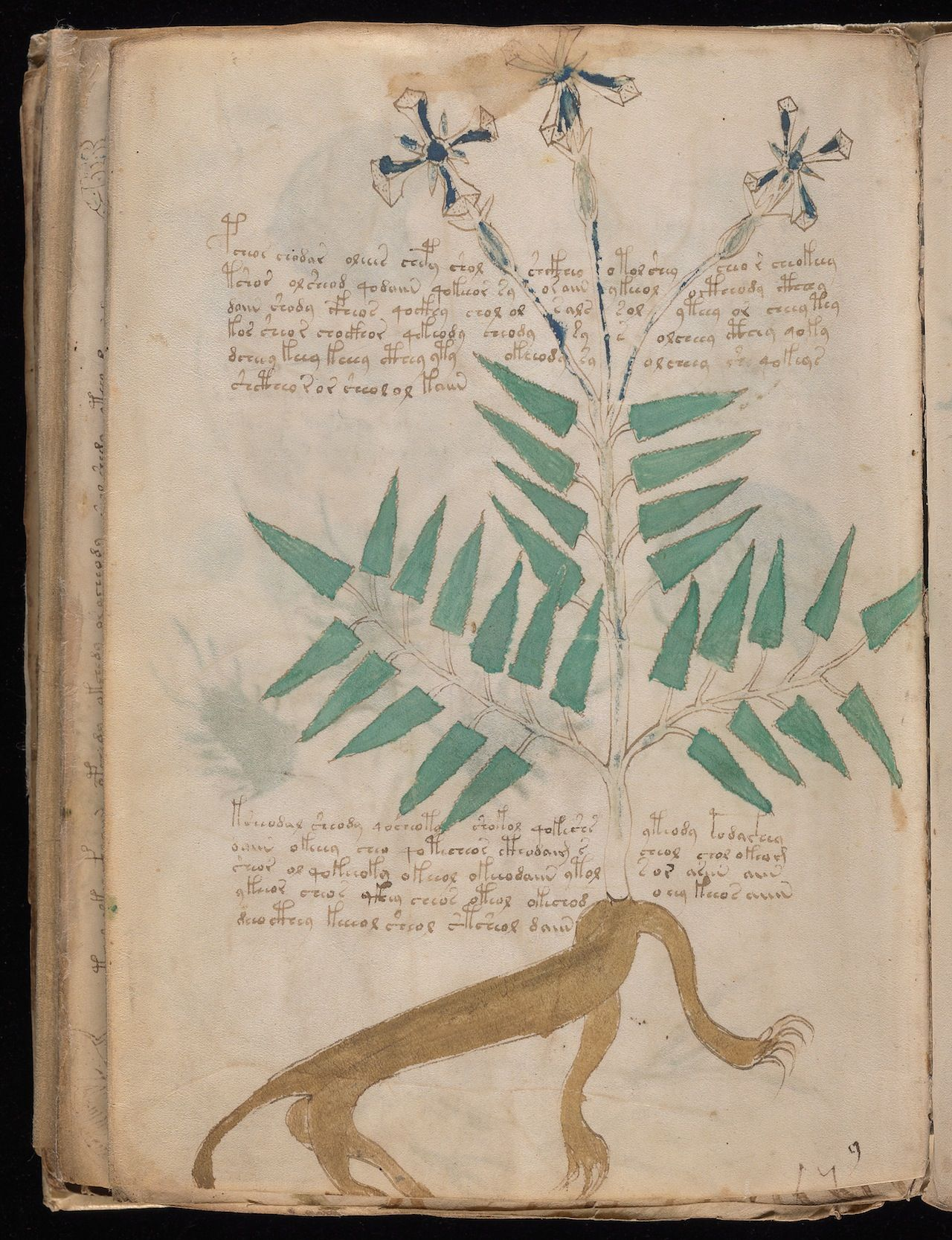 New Scans Of The Voynich Manuscript, A Medieval Book No -7203