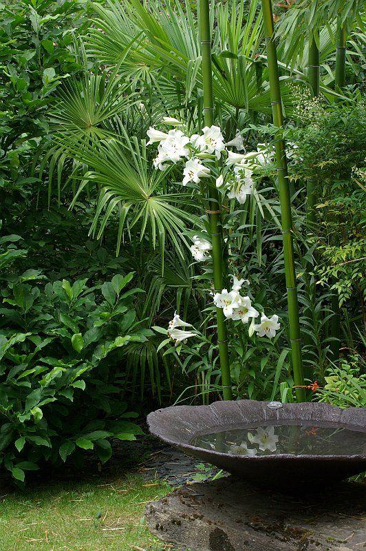 september 2016 garden chic tropical - Tropical Garden 2016
