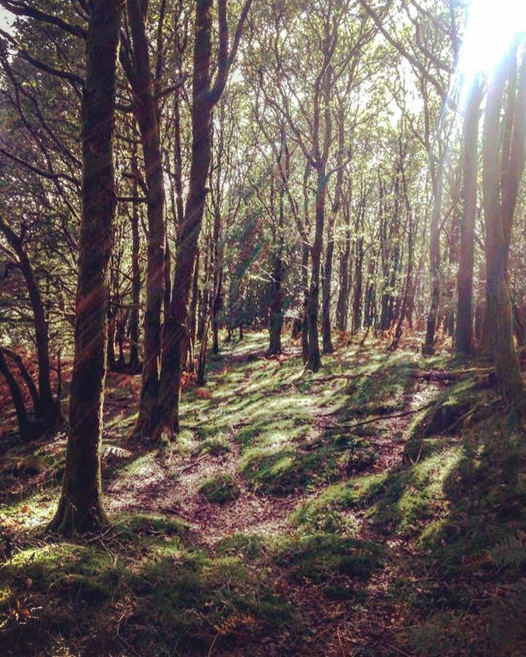#Autumn #trees #woodland #England #LakeDistrict #getoutside #goexplore #weekendings #nature #walk #wander 🍁🍂