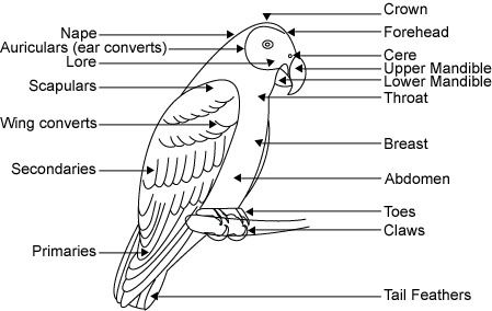 bird-external-anatomy | Reiki ♥ | Pinterest