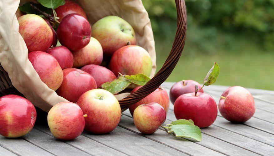 18++ Where do honeycrisp apples come from info