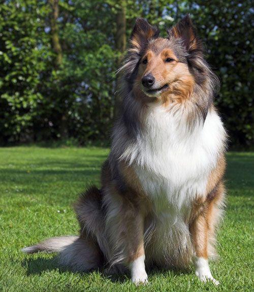 30 Best Large Dog Breeds Large Dog Breeds Dogs Dog Breeds