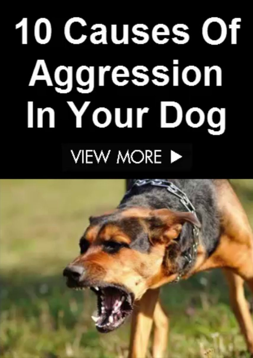 10 Causes Of Aggression In Your Dog In 2020 Aggressive Dog Dogs