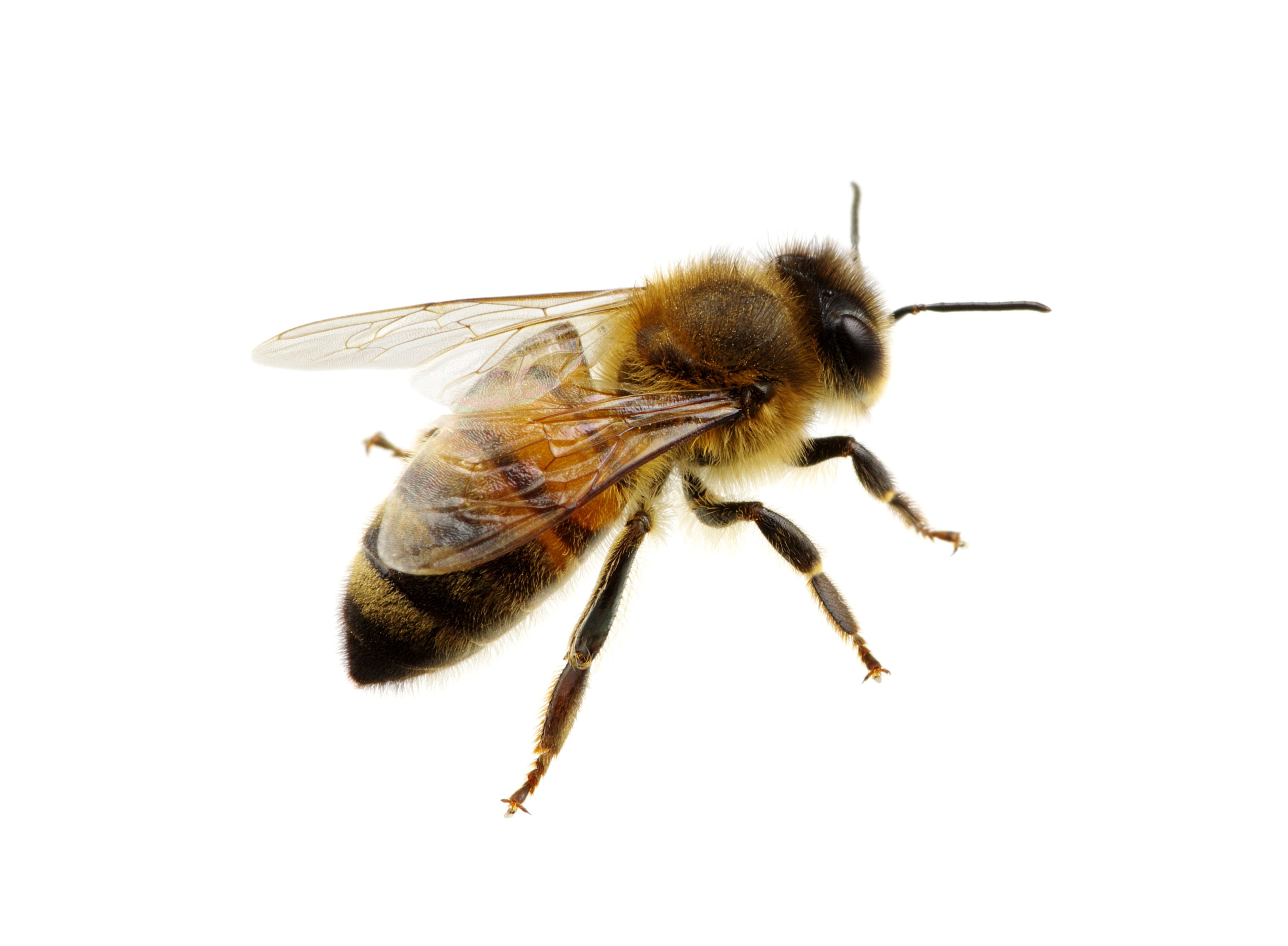 Turn Your Backyard Into A Bee 39 S Dream And Help Stop Their Decline Bee Friendly Garden Bee Friendly Bee
